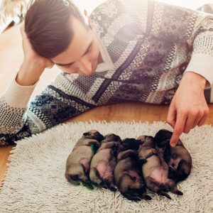 Breeder 5 puppies