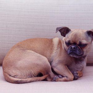 Chug on Couch