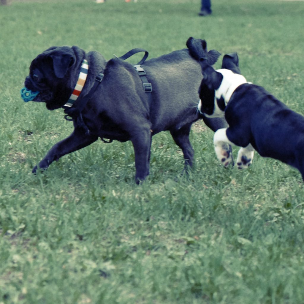 Dog Park a 1024x1024 1