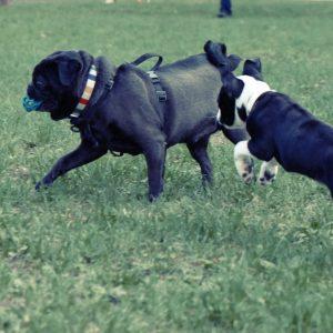 Dog Park a