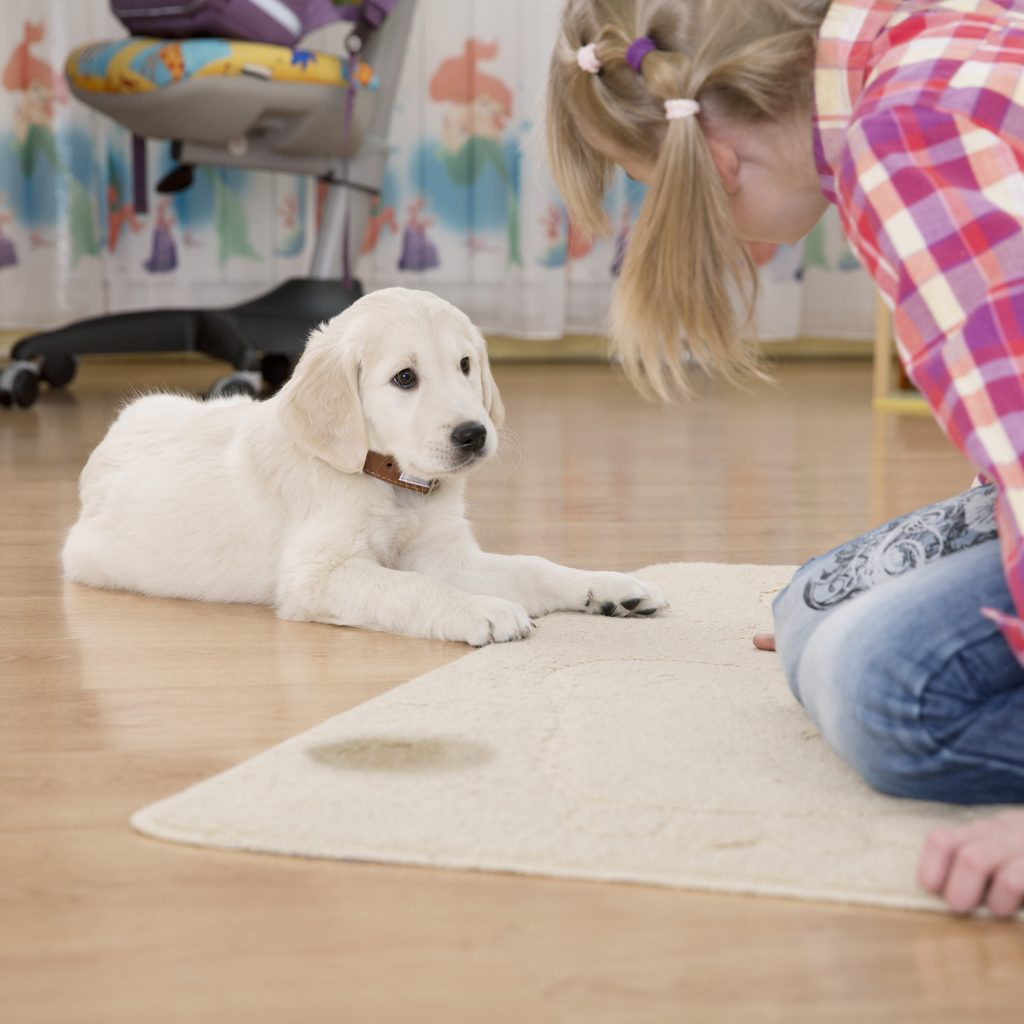 Dog pees on floor
