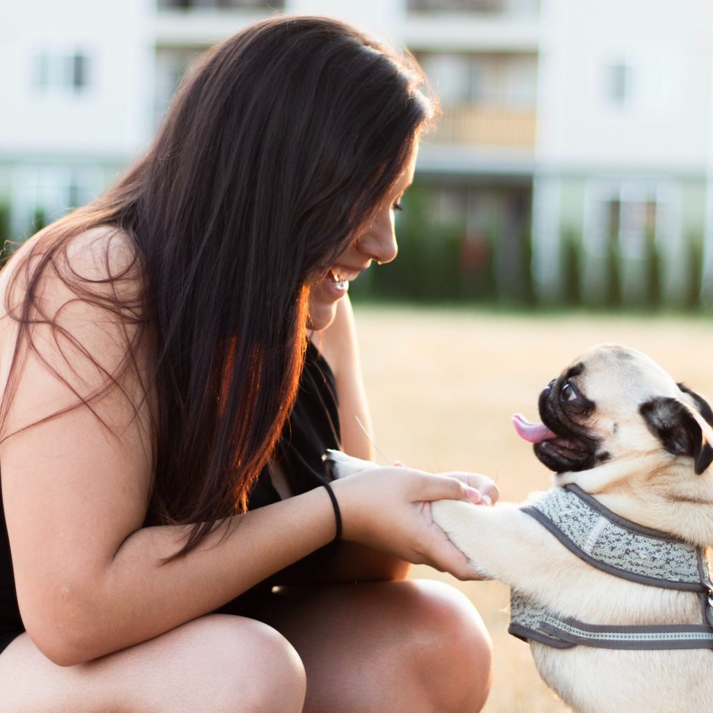 Happy Pug with Woman