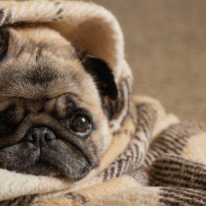 In Blanket