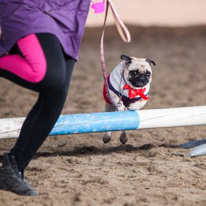 Jump Pug