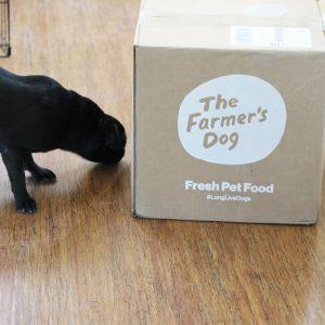 Lulu Farmers Dog
