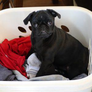 Lulu in Laundry 1920