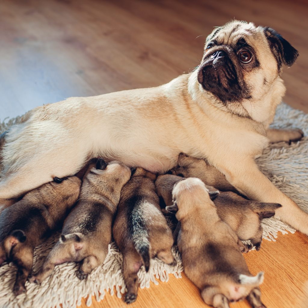 Mom with Pups