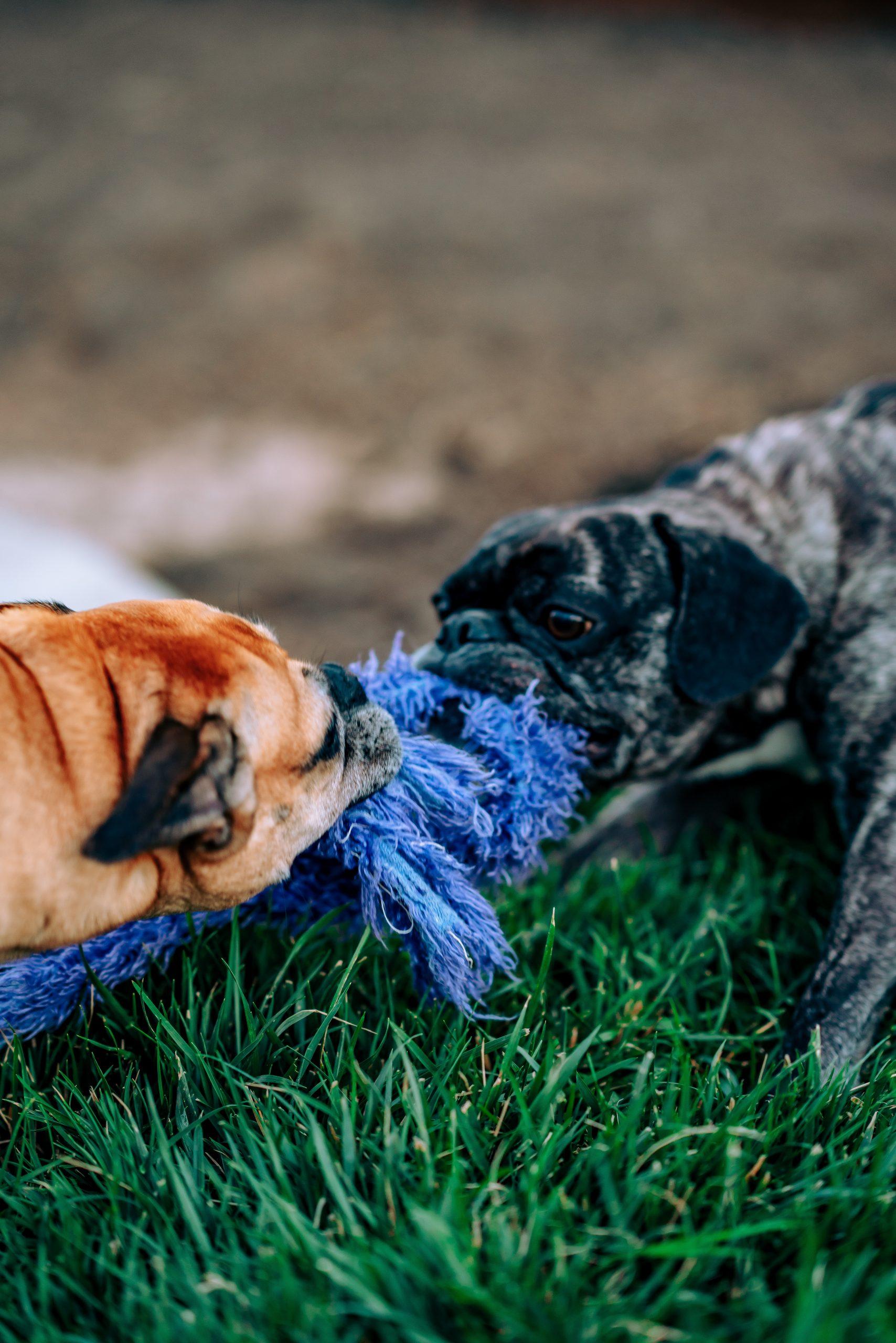 Playing Pugs