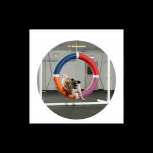 Pug Agility Circle Canvas 5 inches