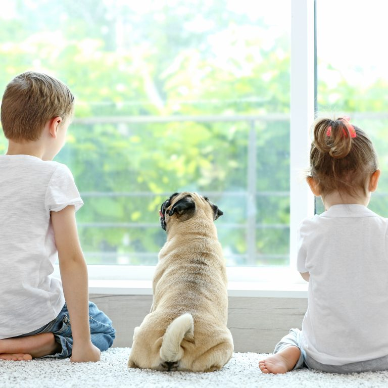 Pugs in Families
