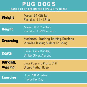 Pug Dog Page Second Image
