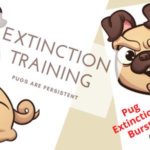 Pug Extinction Burst