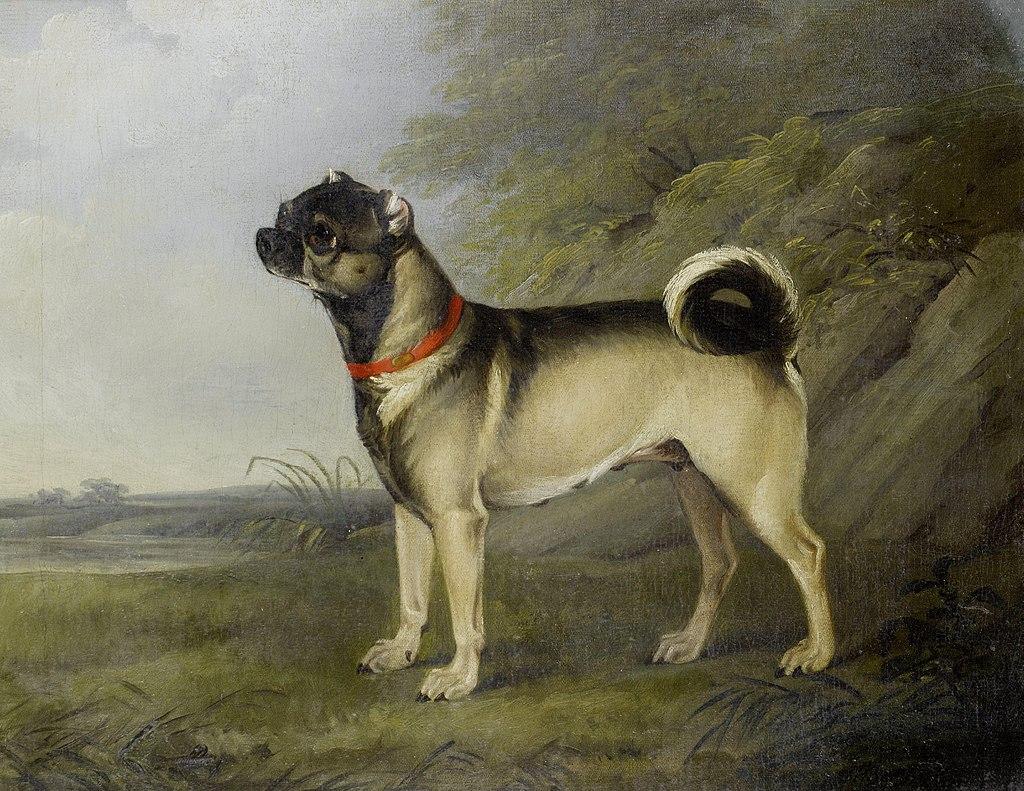 Pug History