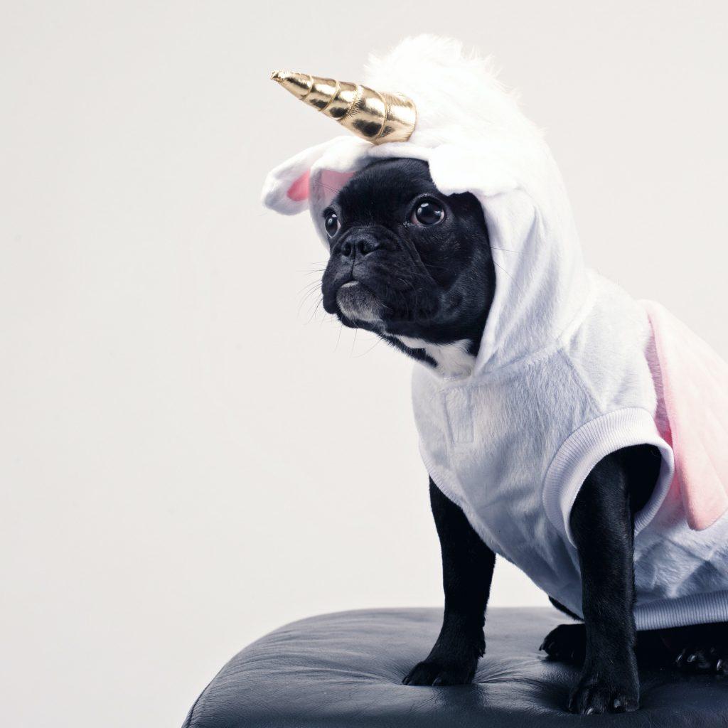 Pug Life Unicorn Pug