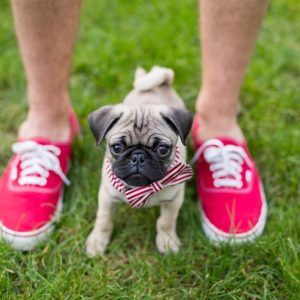 Pug Puppy Pink Shoes