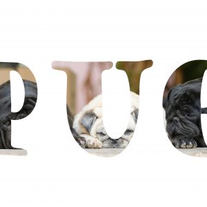 Pug Text