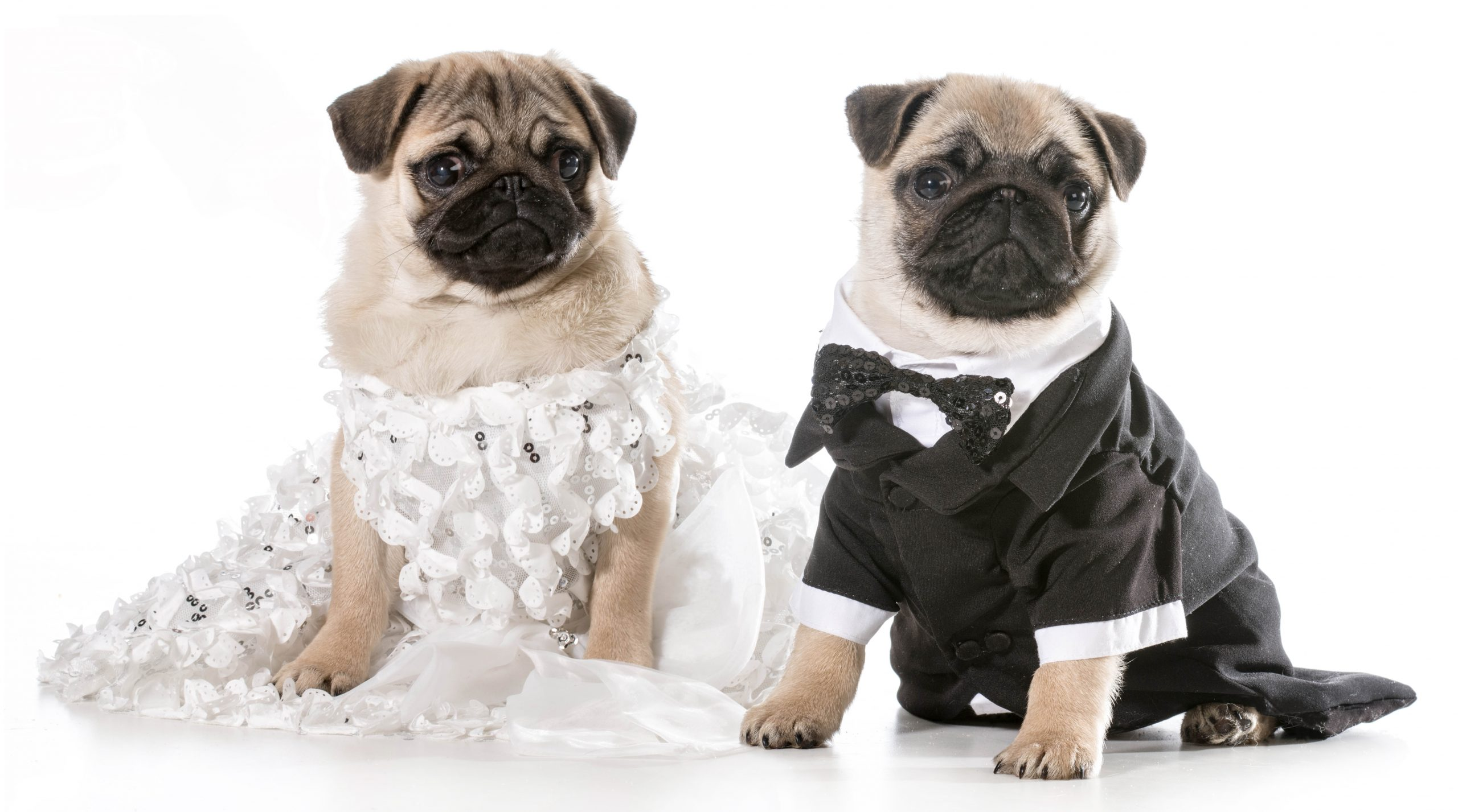 Pugs in Movies