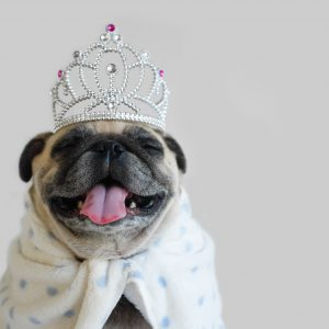 Pug with Crown
