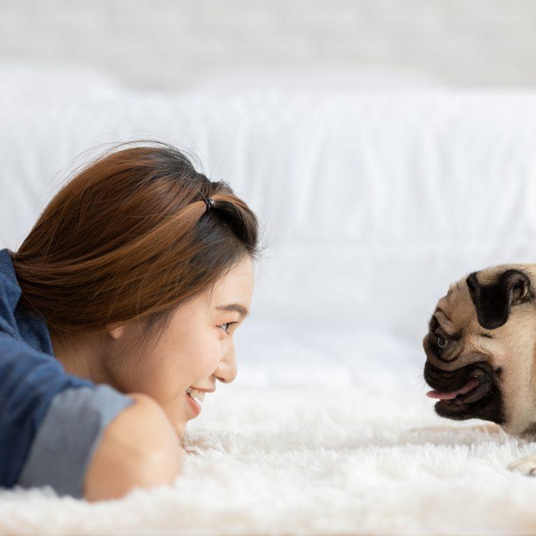 Pug with Woman