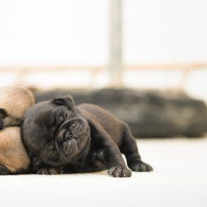 Puppies Sleeping