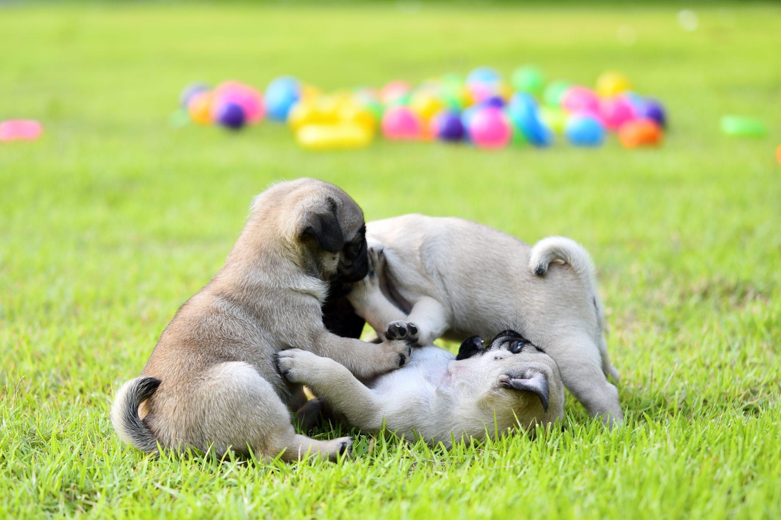 Puppy balls scaled