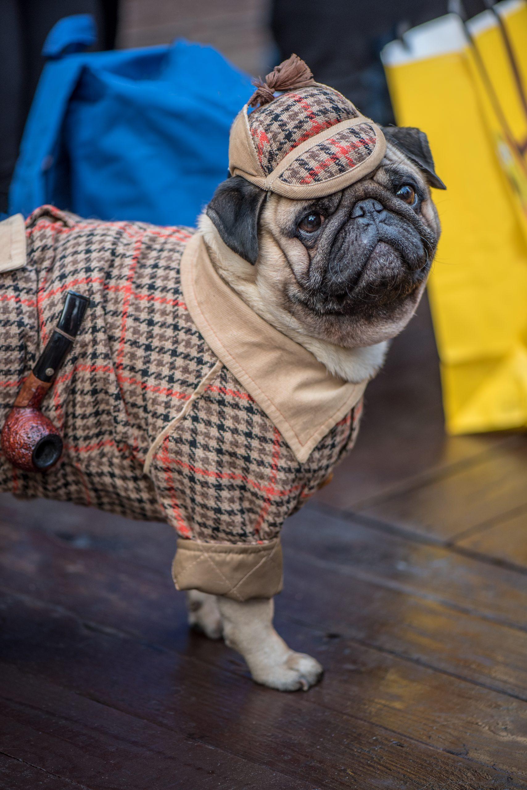 Sherlock Holmes Pug scaled