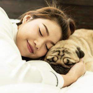 Pug Snoozing