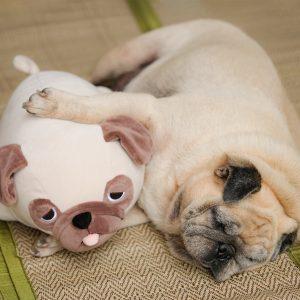 Sleeping Overweight Pug