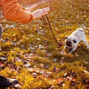 Teaching Pug to Stay
