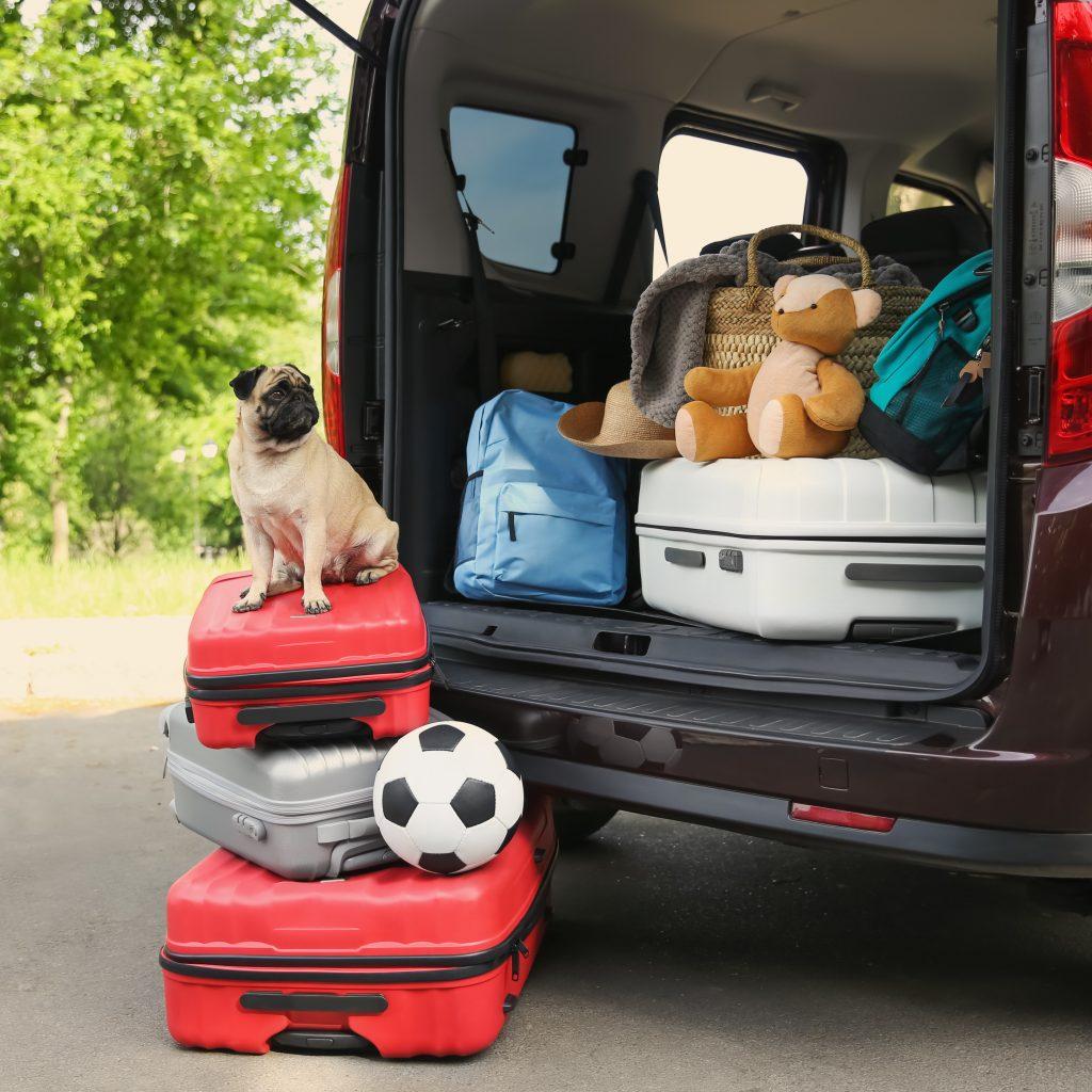 Vacation Pug