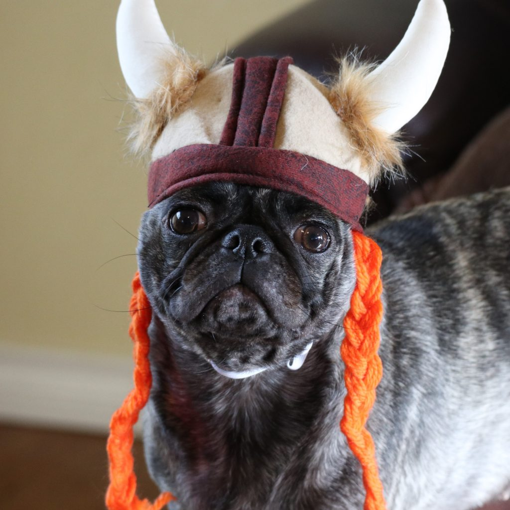 Viking Pug