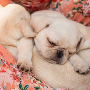 White Puppies
