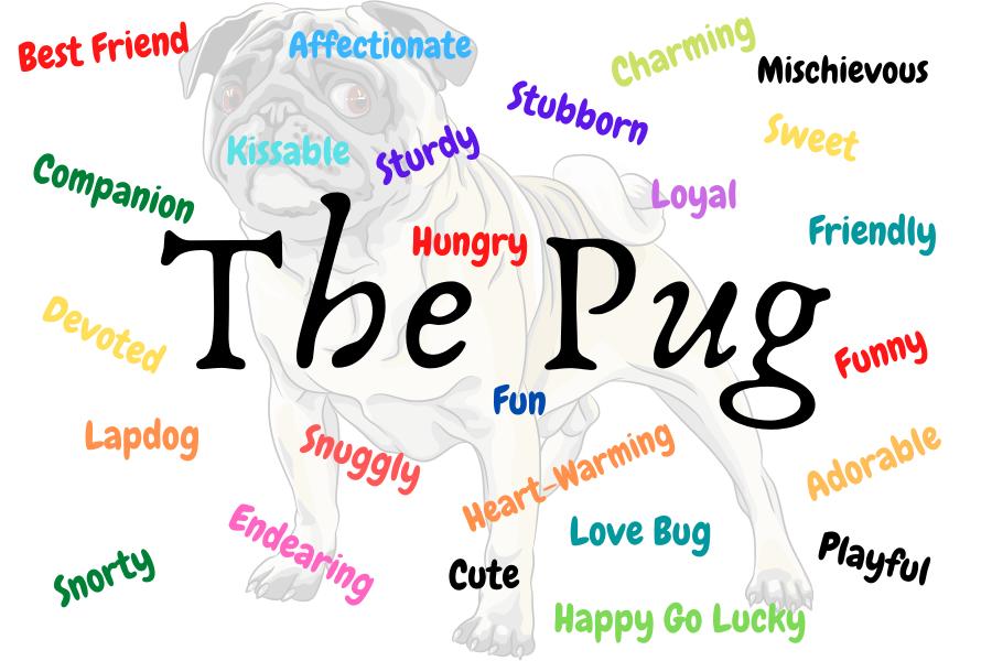 The Pug Dog Design