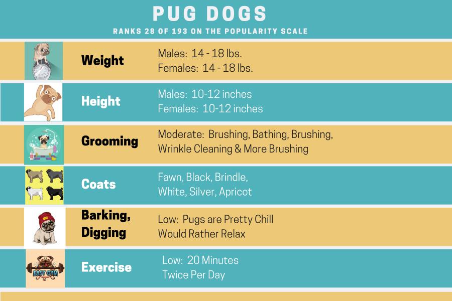 Pug Dog Information